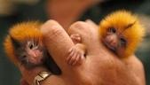 """可愛的""""指猴"""":12.jpg"""