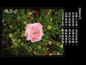 詩情花語:詩情花語14.jpg