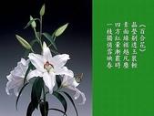 詩情花語:詩情花語02.jpg