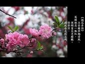 詩情花語:詩情花語12.jpg