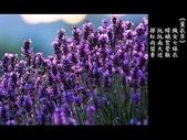 詩情花語:詩情花語16.jpg