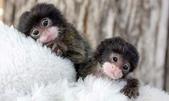 """可愛的""""指猴"""":13.jpg"""