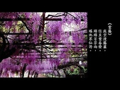 詩情花語:詩情花語11.jpg