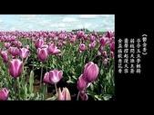 詩情花語:詩情花語13.jpg