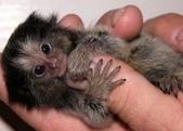 """可愛的""""指猴"""":14.jpg"""