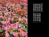 詩情花語:詩情花語15.jpg