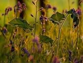 自然之美:自然之美03.jpg