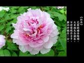 詩情花語:詩情花語08.jpg