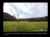 台灣的野花:02.jpg
