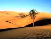 世界十大迷人沙漠:18、世界上最大的沙漠:撒哈拉沙漠