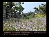 台灣的野花:03.jpg
