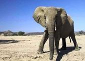 世界十大迷人沙漠:12、唯一有大象行走的沙漠:納米比亞的納米比沙漠