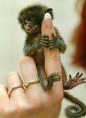 """可愛的""""指猴"""":03.jpg"""