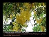 台灣的野花:04.jpg