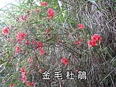 谷關七雄之白毛山:IMG_0617.JPG