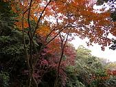 三峽鳶山縱走:DSCN1769.JPG