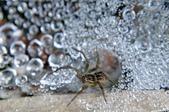 水晶宮&盤絲洞~長疣馬蛛:DSC_0674.jpg