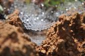 水晶宮&盤絲洞~長疣馬蛛:DSC_0694.JPG