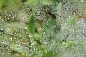 水晶宮&盤絲洞~長疣馬蛛:DSC_0690.jpg
