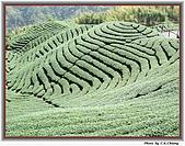 溪頭-八卦茶園:IMG_3686A.jpg