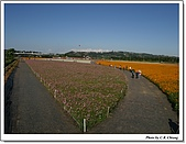 新社花海:IMG_5001_1A.jpg