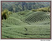 溪頭-八卦茶園:IMG_3655A.jpg