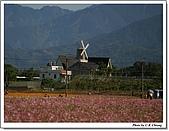 新社花海:IMG_5055A.jpg