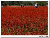 新社花海:IMG_5118A.jpg