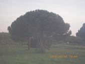 14-03-30(9)拿坡里往羅馬車拍:拿坡里往羅馬7車拍沿途風光。義大利傘松.JPG