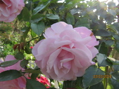 18-03-03(4)雲林縣-古坑鄉-蘿莎玫瑰山莊:蘿莎玫瑰山莊2耐斯企業集團旗下的香氛品牌.jpg