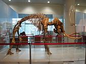 2008-6-20(1)嘉義市-東區(嘉義市立博物館):博物館11冰原巨獸展.JPG