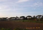 14-03-30(9)拿坡里往羅馬車拍:拿坡里往羅馬6車拍沿途風光。像雨傘的義大利傘松.JPG