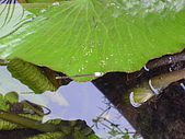 2006-12-10 水溝的驚喜:16豆娘