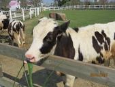 18-03-03(3)雲林縣-崙背鄉-千巧谷牛樂園牧場:千巧谷牛樂園牧場17牛牛奔跑區。可以買牧草餵牛。.JPG