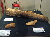 2008-6-20(1)嘉義市-東區(嘉義市立博物館):博物館12冰原巨獸展.JPG
