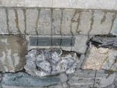 13-03-18(10)老鷹峽谷-最後一根釘紀念碑:紀念碑7Alberta(亞伯達省)的石頭.JPG