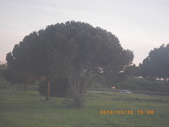 14-03-30(9)拿坡里往羅馬車拍:拿坡里往羅馬8車拍沿途風光。義大利傘松.JPG