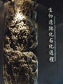 2008-6-20(1)嘉義市-東區(嘉義市立博物館):博物館19化石館.JPG