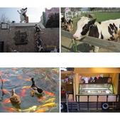 18-03-03(3)雲林縣-崙背鄉-千巧谷牛樂園牧場:相簿封面