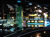 2008-6-20(1)嘉義市-東區(嘉義市立博物館):博物館7化石館.JPG