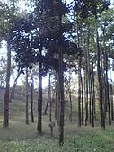 台大熱帶植物標本園和下坪:台大熱帶植物標本園內1.JPG