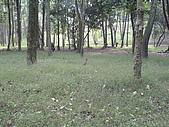 台大熱帶植物標本園和下坪:台大熱帶植物標本園內3鳥和攝影者.JPG