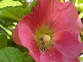 2007-1-1李勇廟:李勇廟(保安宮)16貪吃的蚜蠅.JPG