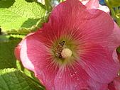 2007-1-1李勇廟:李勇廟(保安宮)17貪吃的蚜蠅.JPG