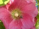 2007-1-1李勇廟:李勇廟(保安宮)19貪吃的蚜蠅.JPG