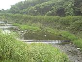台大熱帶植物標本園和下坪:下坪2.J