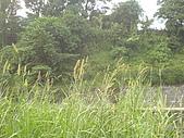 台大熱帶植物標本園和下坪:下坪3.J