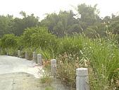 台大熱帶植物標本園和下坪:下坪4.J