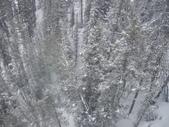 13-03-17(8)班夫國家公園-硫磺山纜車:硫磺山纜車14纜車內向旁望.JPG