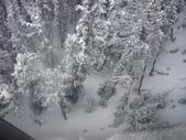 13-03-17(8)班夫國家公園-硫磺山纜車:硫磺山纜車15纜車內向旁望,被雪覆蓋的針葉林.JPG
